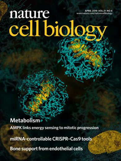 中国医学信息学杂志_我国学者在细胞能量代谢调控领域研究取得重要进展