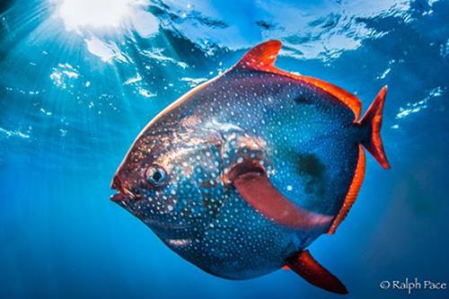 生物右图是鱼鳃的结构示意图