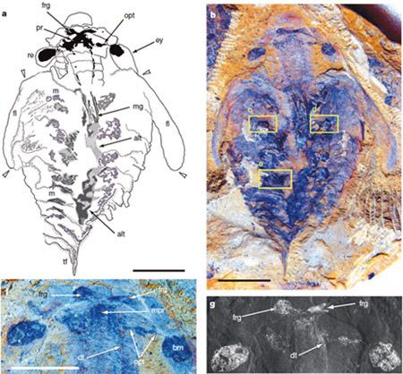 nature报道云南大学关于节肢动物起源的最新研究成果
