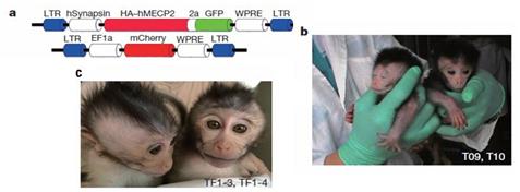 基因的非人灵长类动物模型