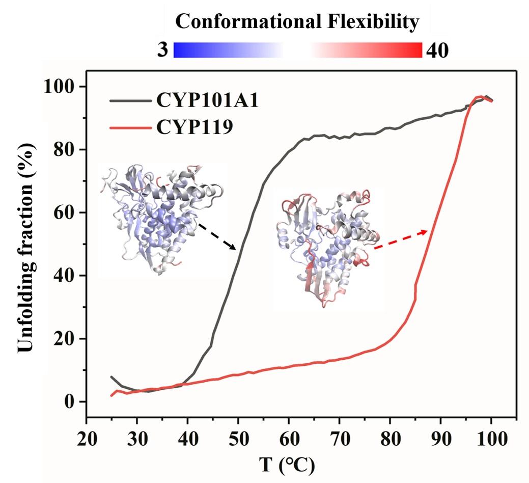 另一方面:蛋白质解折叠过程中其结构上无序度会明显升高,即熵的增加