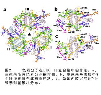 结构模型,并对每一个复合物单体中的14个叶绿素分子